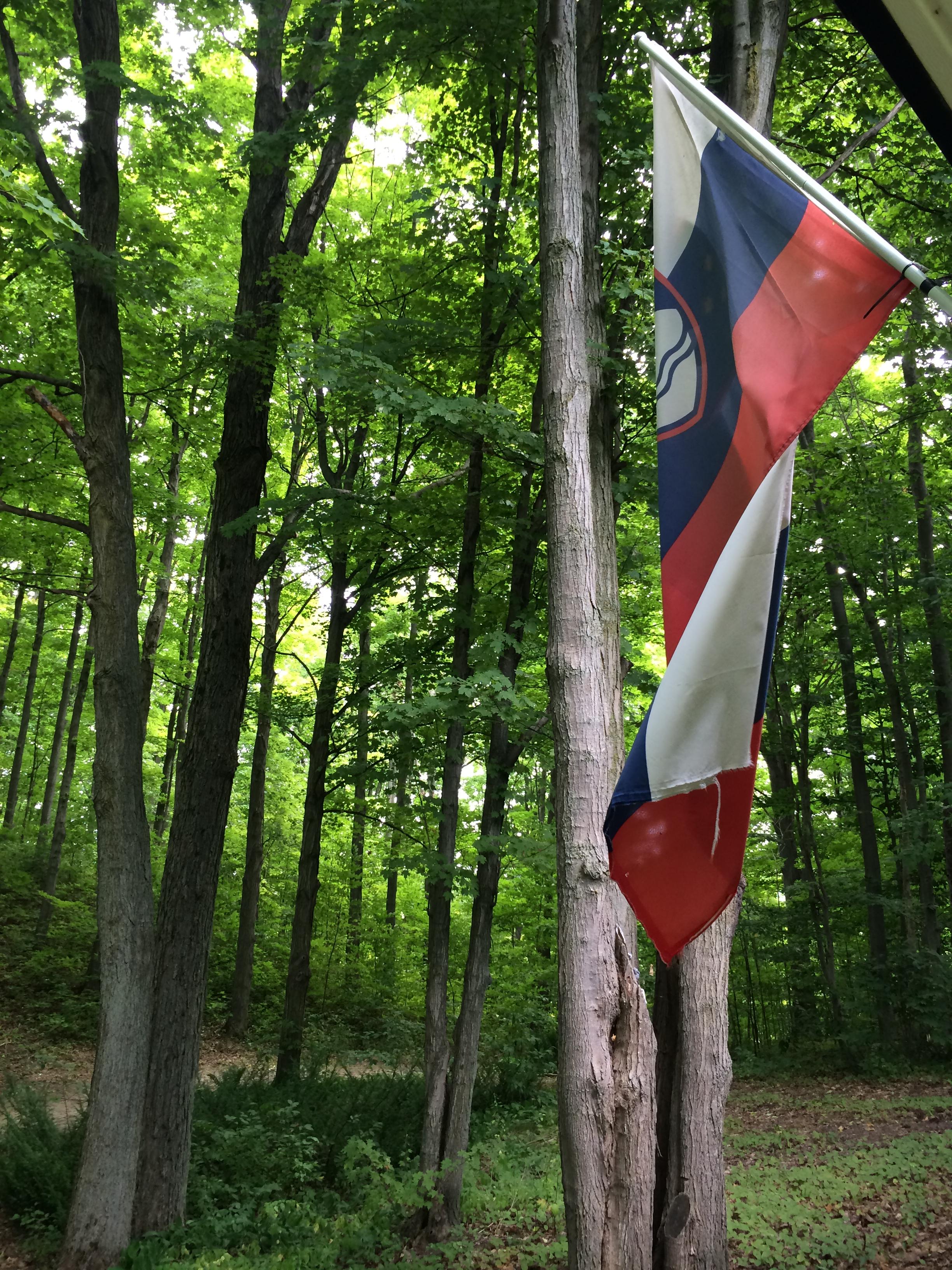 Slovenian woods