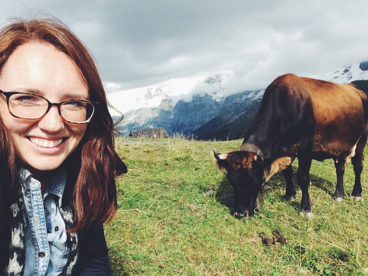 Swiss Cows!