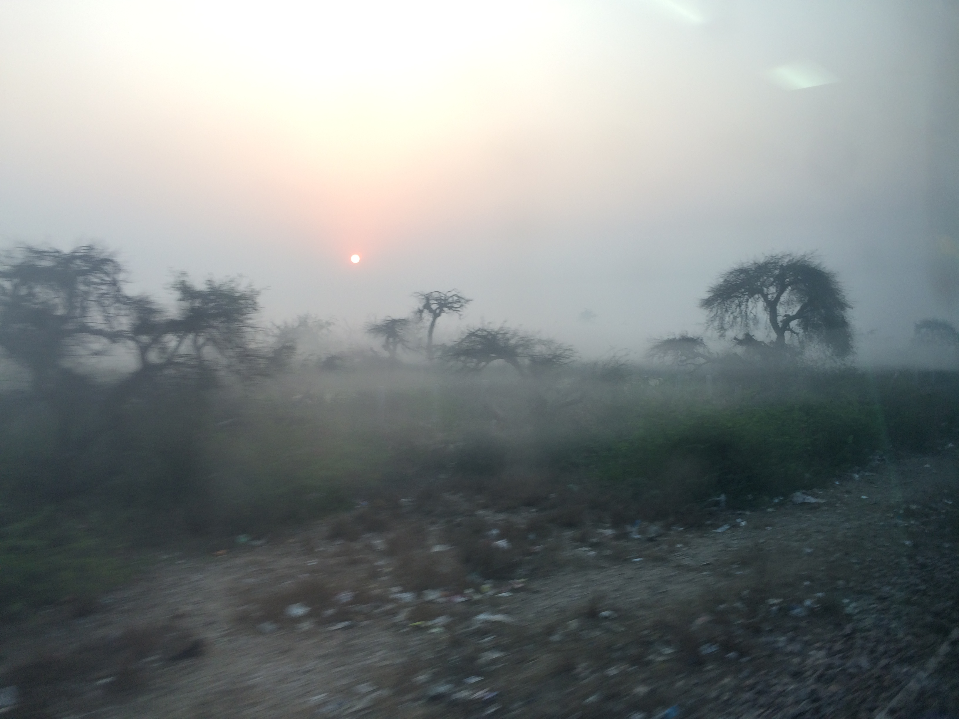 Morning views from the train